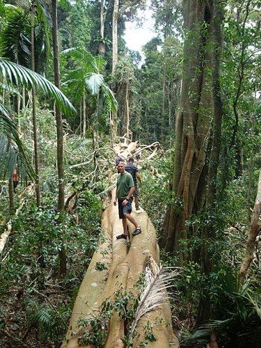 rain forest fallen tree