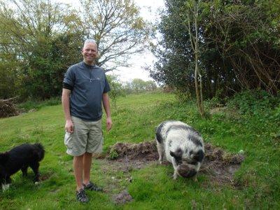 woollypigs meet a woolly pig